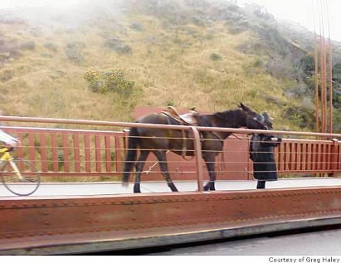 horse-ggb