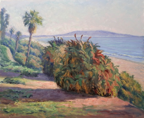 Aloe Arborescens, Bluffs of Santa Monica by Harry Mattull